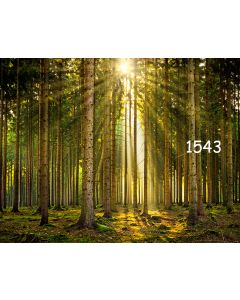 Photography Background in Fabric Forest / Backdrop 1543