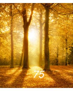 Photography Background in Fabric Forest / Backdrop 75