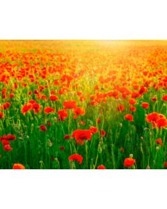 Photography Background in Fabric Poppy Field / Backdrop 1758