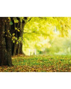 Photography Background in Fabric Scenery Wood with Leaves  / Backdrop 2090