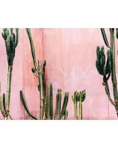 Photography Background in Fabric Cactus Summer / Backdrop 1991